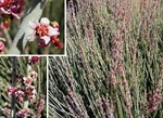Aveda and the Estée Lauder Companies Support Conservation of Candelilla in Mexico